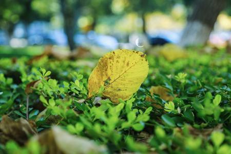 校园, 秋天, 落叶, 叶, 地面, 黄色, 绿色