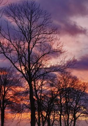 树, 科纳里, 日落, 天空, 树干, 自然, 分支机构