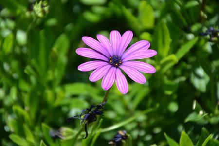 非洲菊, 花, 植物, 玛格丽特, 花园, 自然, 花