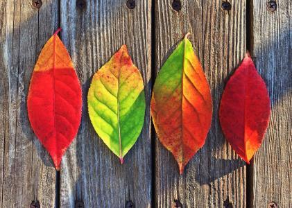 叶子, 秋天, 颜色, 彩虹, 叶, 秋天, 更改