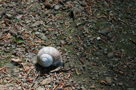 蜗牛, 壳, 蜗牛壳, 住房, 自然, 软体动物, 平静