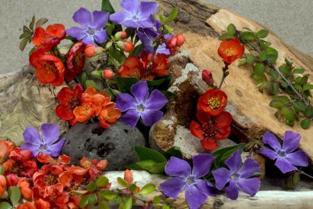 花, 木材, 沙子, 紫罗兰色, 关闭, 开花, 绽放