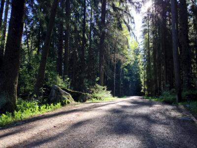 夏季, 光线, 森林, 森林方式, 阳光, 砾石, 阴影