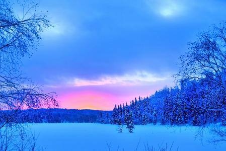 冬季景观, 雪, 森林, 树木, 感冒, 冬天, 魁北克省