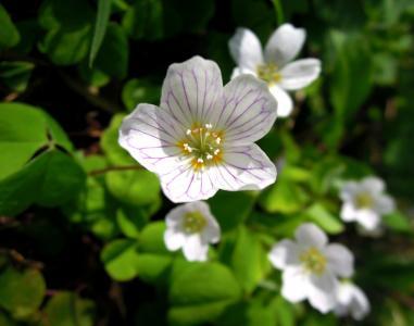 酢, 花, 白色, 花, 自然, 特写, 白花