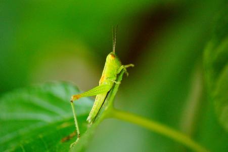 蚱蜢, 颜色, 宏观, 甜点, 昆虫, 特写, 自然