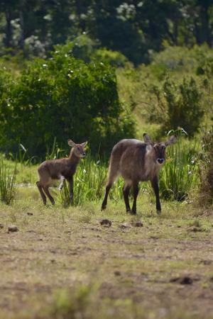 动物, 自然, 生活, 非洲