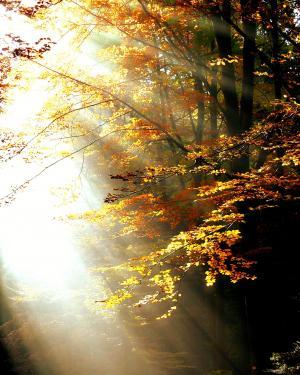森林, 光, 秋天, 树木, 叶子, 颜色, 新光