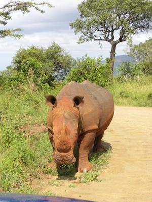 犀牛, 野生动物园, 南非, 野生动物