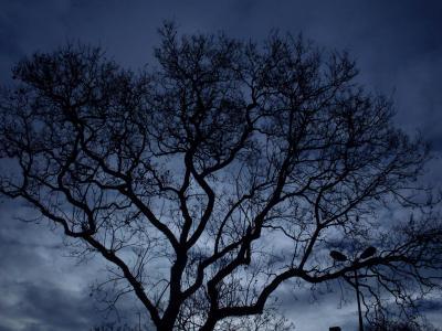 树, 晚上, 黑暗, 天空, 森林, 背景, 蓝色