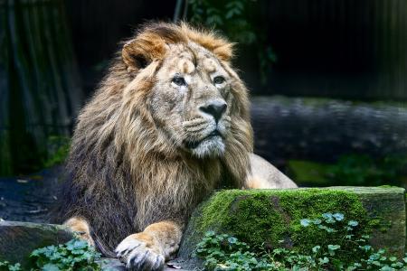 狮子, 野生, 动物, 自然, 国家公园, 野生动物, 猎物