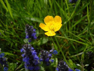 阿尔卑斯褐色, 花, 黄色, 草药, 夏季, 植物区系, 户外