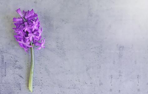 花, 风信子, 樱, 花, 香美的鲜花, 香, 春天的花朵