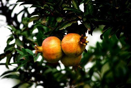 石榴, 健康, 水果, 新鲜, 甜, 营养, 自然