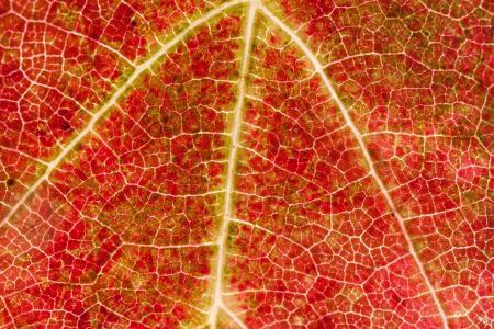 葡萄酒, 叶, 葡萄酒的收获, 葡萄园, 植物, 秋天, 秋天的色彩