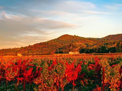 法国, 葡萄园, 山脉, 葡萄树, 农业, 秋天, 秋天