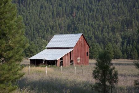 被遗弃, 农业, 建筑, 谷仓, 建设, 针叶树, 国家