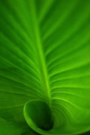 螺旋, 螺旋叶, 绿色, 绿色的叶子, 绿色螺旋叶, 深, 自然