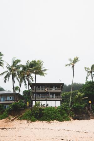 白色, 黑色, 木制, 房子, 下一个, 树木, 多云