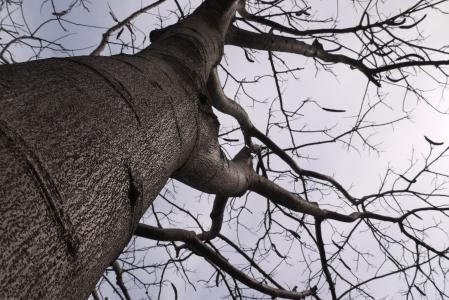树木, 天空, 枯萎