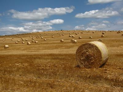 稻草, 贝尔, 草甸, 稻草捆, 地区, 景观, 字段