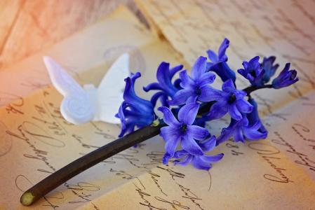 风信子, 花, 开花, 绽放, 蓝色, 香美的鲜花, 香