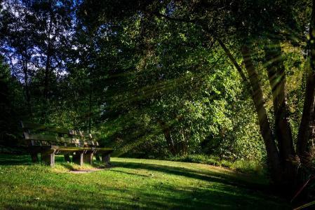 银行, 自然, 景观, 森林, 树, 宁静, 没有人