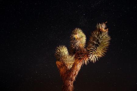 夜晚的天空, 星星, 沙漠, 景观, 宇宙, 约书亚树, 繁星点点