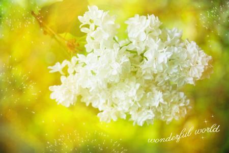 丁香, 白色, 开花, 绽放, 字体, 贺卡, 自然