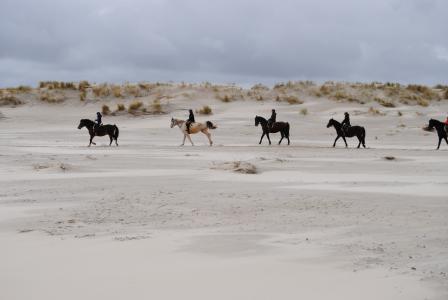 北海, 骑, 瑞特, 马, 岛, 岛屿, 海滩