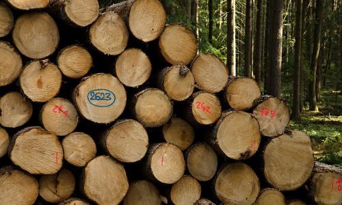 木材, 提取, 森林, kulatina, 树木, 戒指, 失败者