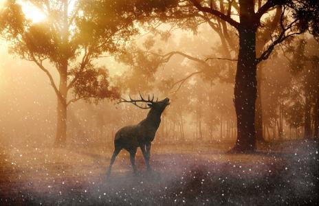 美国好施集团, 野生, 鹿茸, 自然, 森林, 草甸, 照明