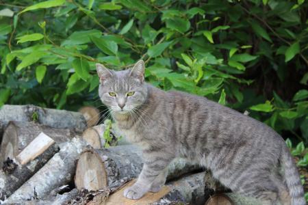 猫, 构成, 动物, 宠物, 构成, 可爱, 国内