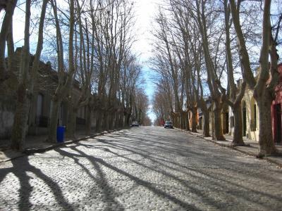 大道, 鹅卵石, 树木, 铺路, 街道, 石头, 鹅卵石