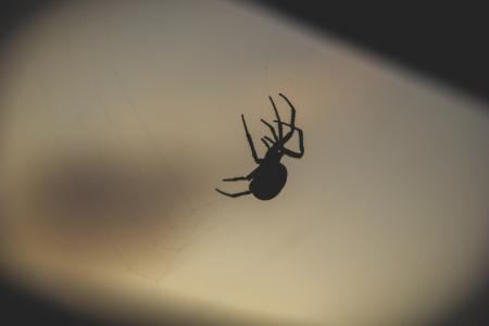 晚上, 黑暗, 秋天, 蜘蛛, 蜘蛛网, 一种动物, 动物主题