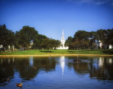 公园, 池塘, cohasset, 马萨诸塞州, 常见, 水, 鸭子