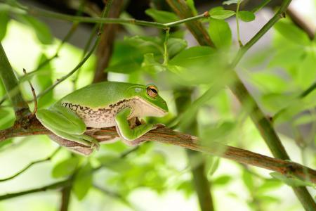 自然, 在初夏, 植物, 绿色, 叶, 青蛙, 生物