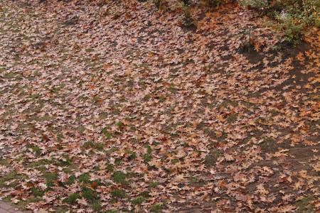 叶子, 秋天, 10 月, 每年的时候