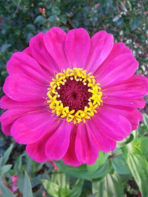 褐色花, 百合, 绽放