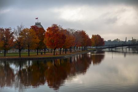 秋天, 树木, 几点思考, 蒙特利尔, 旧端口, 风光, 落叶