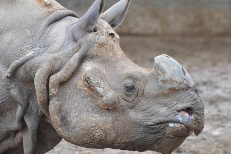 犀牛, 动物, 动物园