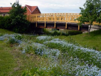 夏季, 桥梁, 花, 草, 树木, 灌木, 房屋