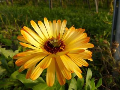 花, 开花, 绽放, 黄色, 自然, 植物, 夏季