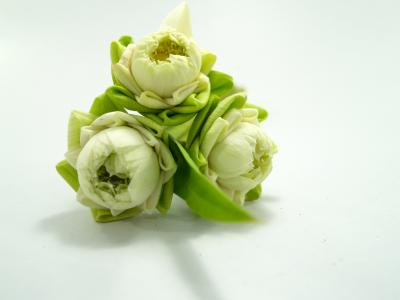 白色, 花, 莲花, 装饰, 绽放, 水生, 温暖