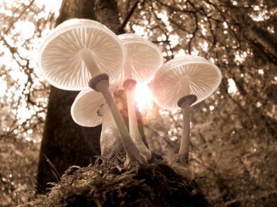 森林, 蘑菇, 自然, 秋天, 光, 树, 金色的秋天