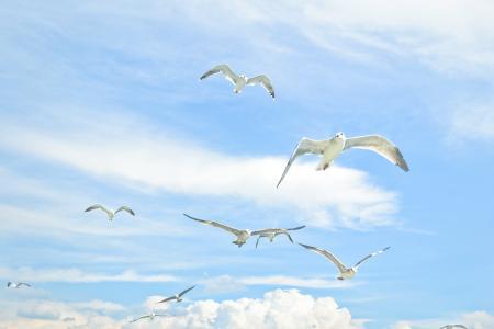 海鸥, 天空, 鸟对天空, 鸟, 海鸥, 海, 夏季