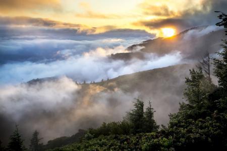 山脉, 景观, 雾, 吸烟, 森林, 树木, 环境