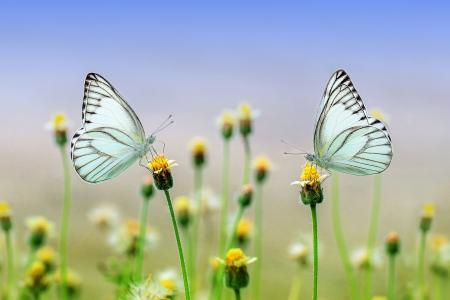 蝴蝶, 昆虫, 宏观, 动物, 自然, 春天, 花园