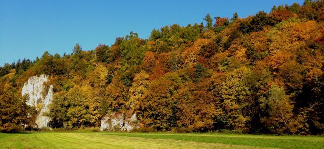 秋天, 景观, 树, 自然, 森林, pieskowa skała 城堡, 国家公园