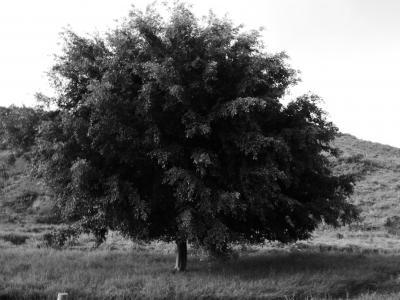 树, 景观, 自然, 悲伤, 山, 农场, roça